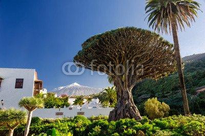 Impresión de DRUCK-SHOP24Deseos Diseño: dragón algodón y Teide En Tenerife # 83927299–Imagen Sobre Lienzo, Foto de Póster, Placa de Aluminio Dibond, Cristal acrílico, Forex, Adhesive de Pantalla