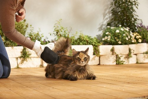 Katzen Pflegeset 6-Teilig