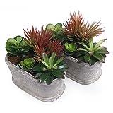 T4U 2er Set Künstliche Sukkulenten Dekorative Kunstpflanzen Bonsai mit Grauen Topf - Form 4, 18 x 9.2 x 15cm (L x B x H)