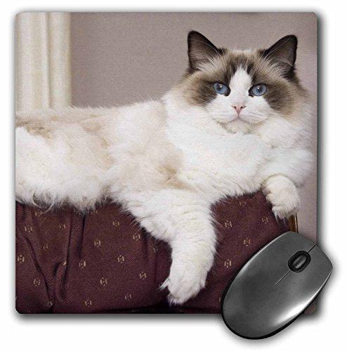 pedigree-poupee-de-chiffon-chat-se-detendre-na02-pwo0122-piperanne-worcester-mouse-pad-8-by-203-cm-m