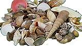Echte Muscheln 120 gr. Natur Deko Muschel Set Wellnes Mischung