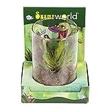 FloraAtHome Sumpfpflanzen - Papageien-Schlauchpflanze schmalblättrig, in Dekoglas - Sarracenia psittacina