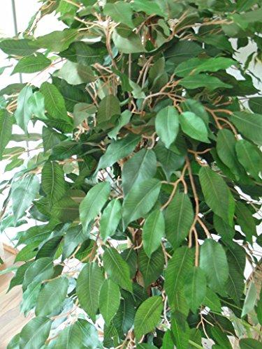 SALE: Exklusiver künstlicher Ficus Benjamini mit Naturstamm ca 120 cm getopft!