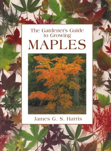 Gardener's Guide to Growing Maples