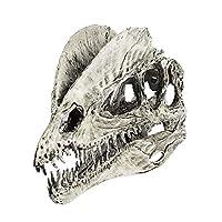 Dinosaur Dilophosaurus Skull Replica Skeleton Model Aquarium Ornament Home Decor 2 Color Pick