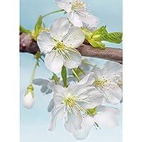 Komar XXL2-033 184 x 248 cm Blossom Flower Floral Wallpaper