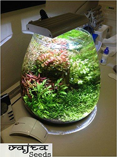 33% OFF on Natural garden plants Aquarium Plants and Random