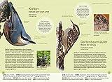 Gartenvögel lebensgroß - 3