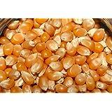 Satymev Popcorn Seeds , 500 Gm