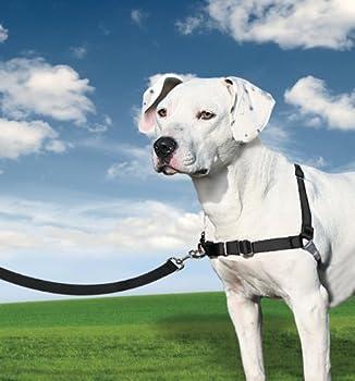 PetSafe - Harnais pour Chien Moyen Easy Walk (M),  Facile à Utiliser, Anti-Traction avec 4 points de Réglage pour un Confort Maximal - Noir
