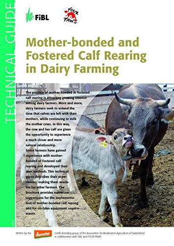 mother-bonded-and-fostered-calf-rearing-in-dairy-farming