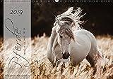 Pferde - Spiegel deiner Seele (Wandkalender 2019 DIN A2 quer): Lassen Sie sich entführen in die Faszinierende Welt der Pferde (Geburtstagskalender, 14 Seiten ) (CALVENDO Tiere)