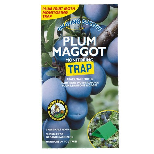 growing-success-plum-maggot-monitoring-trap