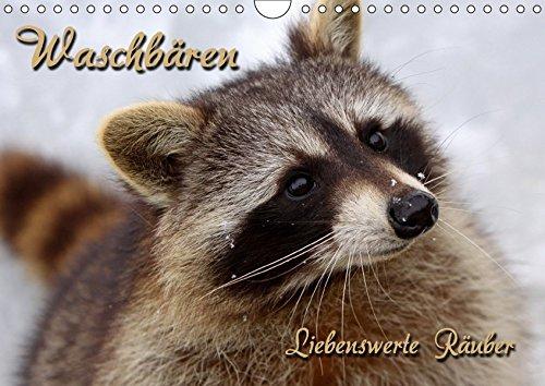 HOBEA-Germany - Zapatos infantiles en diferentes colores y diseños de animales Waschbär Talla:26/27 (30-36 Monate) NgQAh0Th
