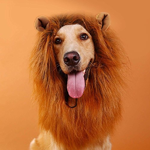 BEETEST León melena pelo peluca con orejas para Pet perro disfraz Halloween Party Dress up
