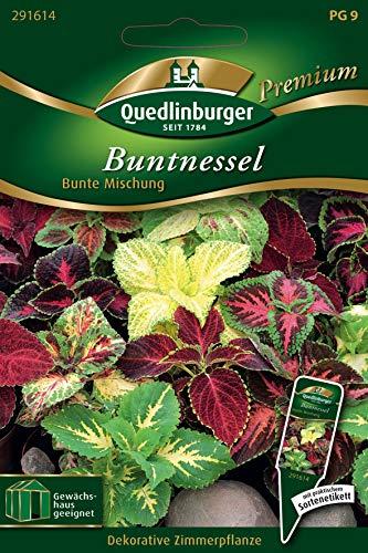 Buntnessel, Coleus blumei, ca. 50-80 Samen
