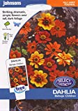 johnsons seeds - Pictorial Pack - Fiore - Dalia Bishops Children - 40 Semi