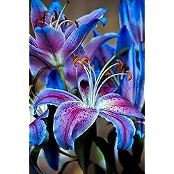 Azalea gardens Indoor Dwarf 1 PCS Rare-lily-flower-BULB -planting-garden-flower-lilium-Perfume-Survival