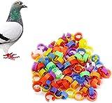 HeroNeo® 100X Chicken Hen Pigeon Leg Poultry Dove Bird Chicks Duck Parrot Clip Rings Band