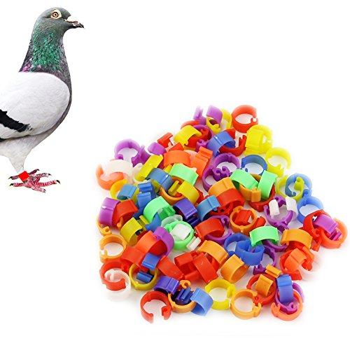 heroneo 100x Huhn Henne Taube Bein Geflügel Taube Vogel Küken Ente Parrot Clip Ringe Band (Vogel Bein Bänder)