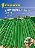 Bohnen - BuschBohnen - Primavera von Kiepenkerl