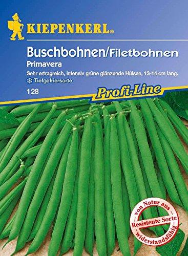 Bohnen – BuschBohnen – Primavera von Kiepenkerl