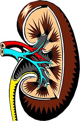 Descargar Libro Calculos renales remedios naturales: riñon calculos renales tratamientos naturales de giancarlo martinez
