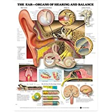 The The Ear: Organs of Hearing and Balance Anatomical Chart