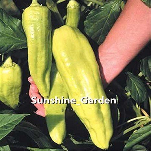 100 graines / paquet géant graines de poivre --Marconi Peppers -DIY jardin des plantes de légumes bon goût