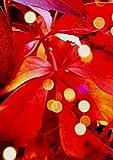 Kalender 2018 - DIN A5 - Herbstzeit - rotes Laub: 1 Woche pro Doppelseite