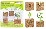 Safari Ltd. Life Cycle of A Green Bean Plant