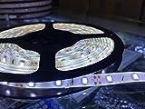 Timewanderer Tira de Luz 5M/16.4ft 300 LEDs 3528 SMD DC 12V LED Flexible IP65 Impermeable Decoración para la Boda la Navidad, Jardín, Iluminación DIY y Fiestas (Blanco Frío)