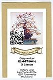 Bonsai - Diospyros kaki - Kaki-Pflaume (5 Samen)