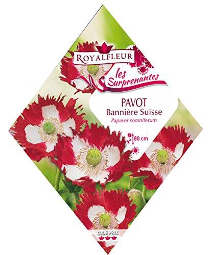 Royalfleur PFRK25526 Semi di papavero festone Svizzera sorprendente