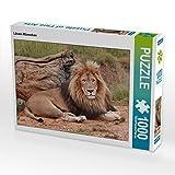 CALVENDO Puzzle Löwen Männchen 1000 Teile Lege-Größe 64 x 48 cm Foto-Puzzle Bild von N N
