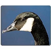 Luxlady Gaming Mousepad foto ID: 39141686 Canada Goose Branta Canadensis profilo contro acqua, colore: blu