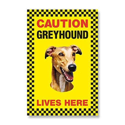 caution-greyhound-lives-here-beware-of-dog-sign-yellow-priplak-plastic