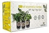 Cultivea -Bio Kräuter Anzuchtset -100% Öko Kräutersamen - Indoor Garten - Samen aus Frankreich - Das perfeckte Geschenkset - Pflanzset (Dill, Salbei, Zitronen-Basilikum) - DIY -