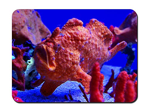 Maui Ocean Center The Hawaiian Aquarium - Customized Rectangle Non-Slip Rubber Mousepad Gaming Mouse Pad 8.6