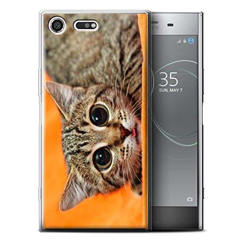 Stuff4® Gel TPU Hülle/Case für Sony Xperia XZ Premium/Scheues Kätzchen Muster/Lustige Tiere Kollektion - Lustige Kätzchen