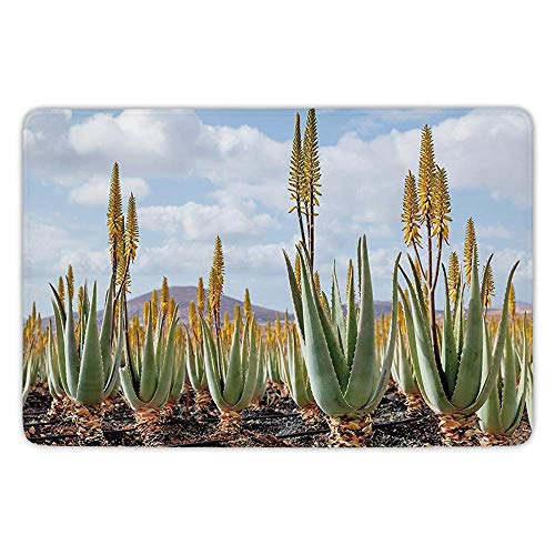 Bathroom Bath Rug Kitchen Floor Mat Carpet,Plant,Photo from Aloe Vera Plantation Medicinal Leaves Remedy Fuerteventura Canary Islands Decorative,Multicolor,Flannel Microfiber Non-slip Soft Absorbent