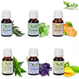 [Sponsored]Kalp Pack Of 6 Essential Oils -15 ML EACH(90ml Total)/Eucalyptus Essential Oil, Lavender Essential Oil, Orange Essential Oil, Peppermint Essential Oil, Tea Tree Essential Oil, Ylang Ylang Oil