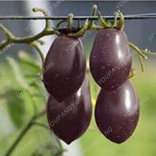 100 graines / paquet Graines rares Noir tomate très savoureux Nutritive bruyères Légumes Graines Bonsai pour jardin Plantation Easy Grow Deep Blue