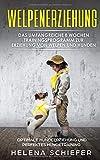 Welpenerziehung: Das umfangreiche 8 Wochen Trainingsprogramm zur Erziehung von Welpen und Hunden! Optimale Hundeerziehung und das Perfekte Hundetraining! Erziehen Sie Ihren Hund / Welpen super schnell -