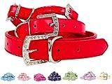 Lushpetz Hundehalsband aus Kunstleder mit Strassschnalle XS, klein, mittel und groß (XS, Rot)