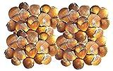 Qualità selezionato conchiglie–circa 150pezzi Reeve, Bittersweet conchiglie per artigianato e decorazione, creazione di gioielli e collana, conchiglie per mini giardino ornamenti