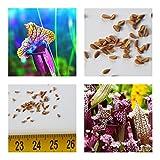 Sarracenia rubra (pianta carnivora) - 20 semi -resistente