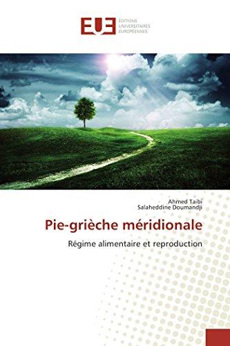 Pie-grièche méridionale par Ahmed Taibi