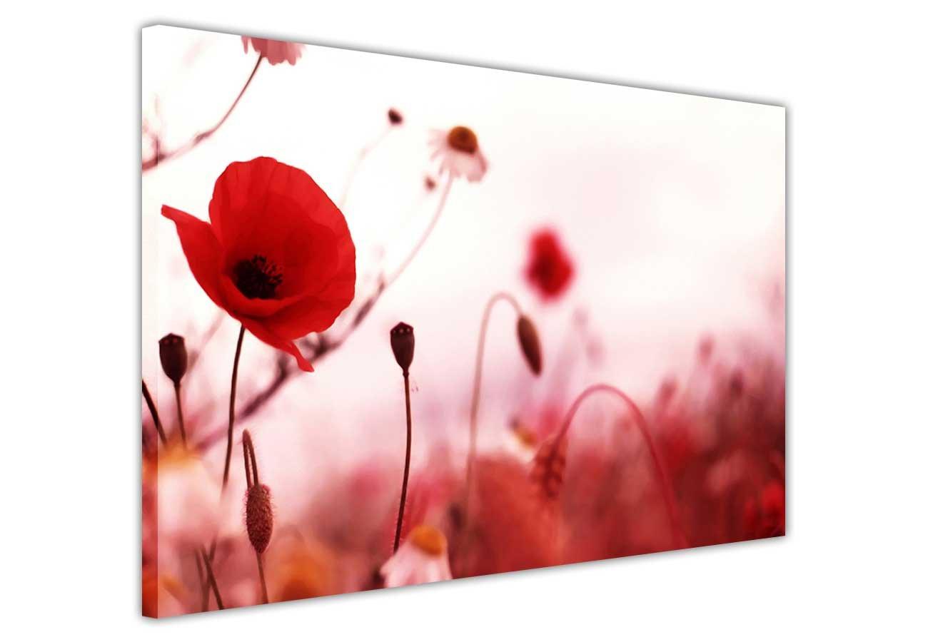 canvas wall art prints red poppy flowers flowers romantic photo