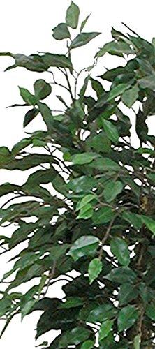 Birkenfeige/ Ficus benjamina, künstlich, 150 cm hoch, mit Topf, Grün